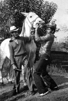 Lovara in Rumänien überprüfen ein Pferd